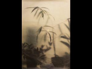 Mathilda Olmi, L'heure bleue, Photographie